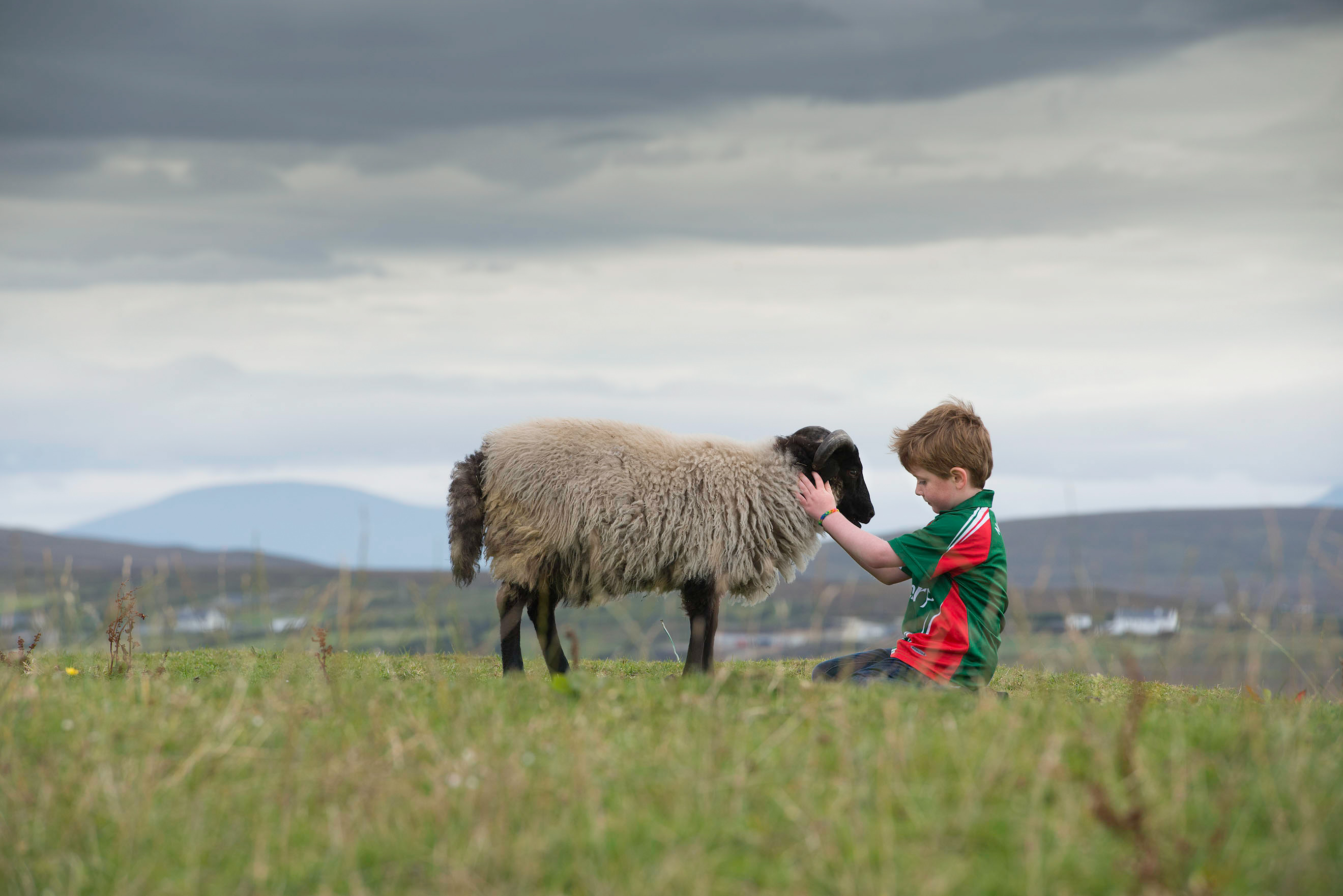 editorial-public-relations-corporate-photographer-mayo-irelandCalveysAchillMountainLamb171